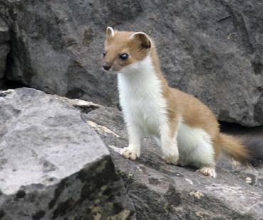Fauna di Uzbekistan
